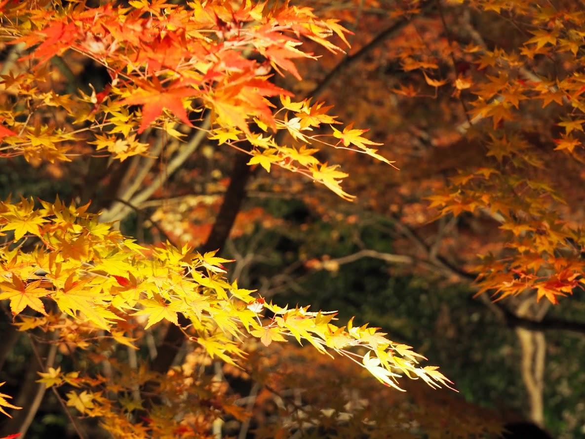 2018年秋の京都、東福寺散策と宝厳院のライトアップを満喫のアイキャッチ画像